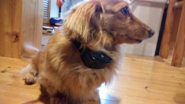 buyuwish-dog-training028