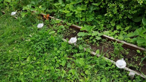 honeysmart-garden-light024