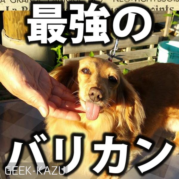 【ペットバリカン】犬の毛を切るのはバリカンが一番!