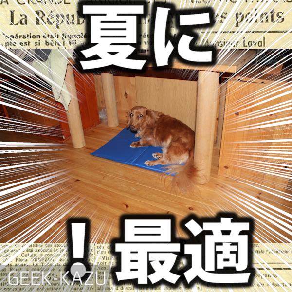 【ソフトジェルマット】犬もたちまち天国に!暑い夏にペットにプレゼントしよう!